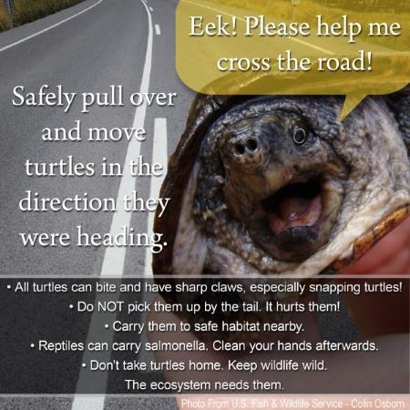 turtle_help_me_sm
